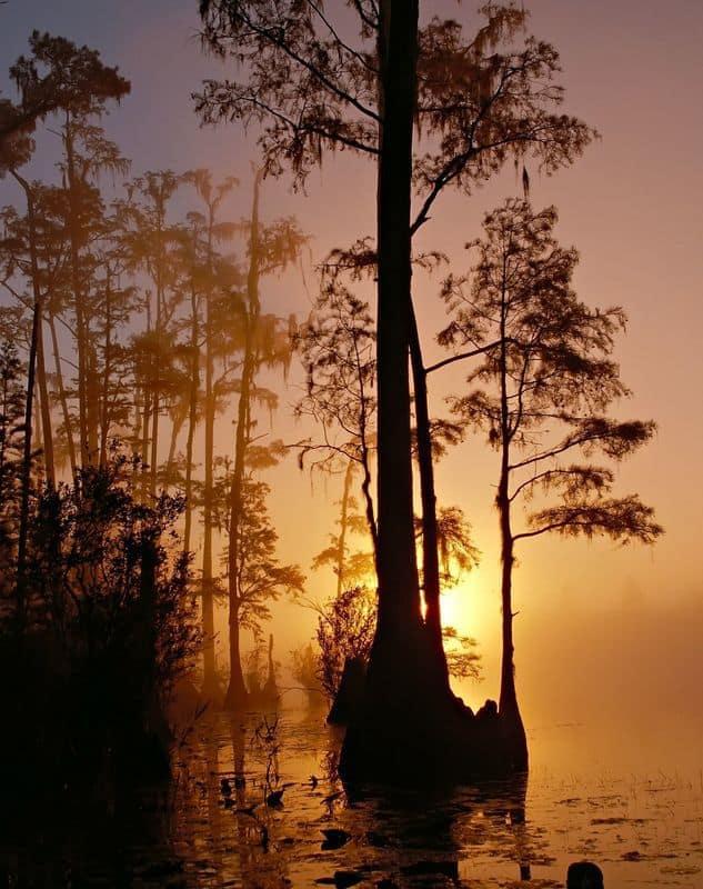okefenokee-swamp-86611_1920