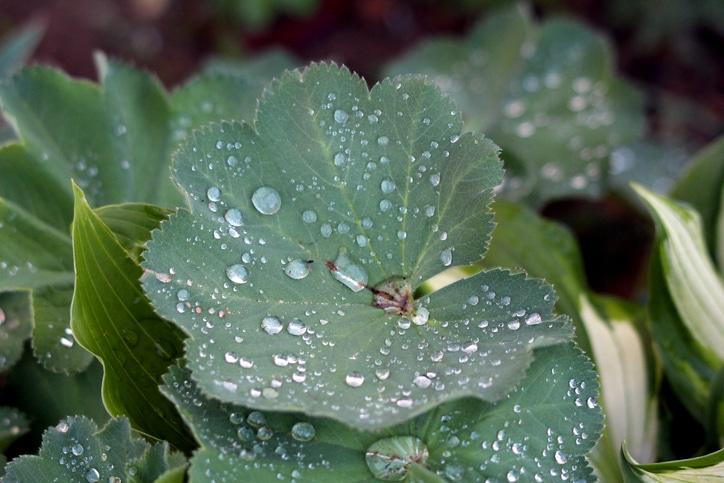 nomi di piante in inglese